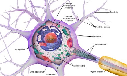 نورو فیزیولوژی یادگیری ، حسی ، رفتاری
